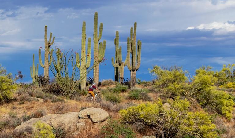 Mountain Biking In the Arizona Desert Near Phoenix