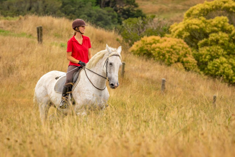 An attractive happy smiling young woman dressed in a red polo shirt riding her white horse through long dried golden colour grasses, copyspace to the