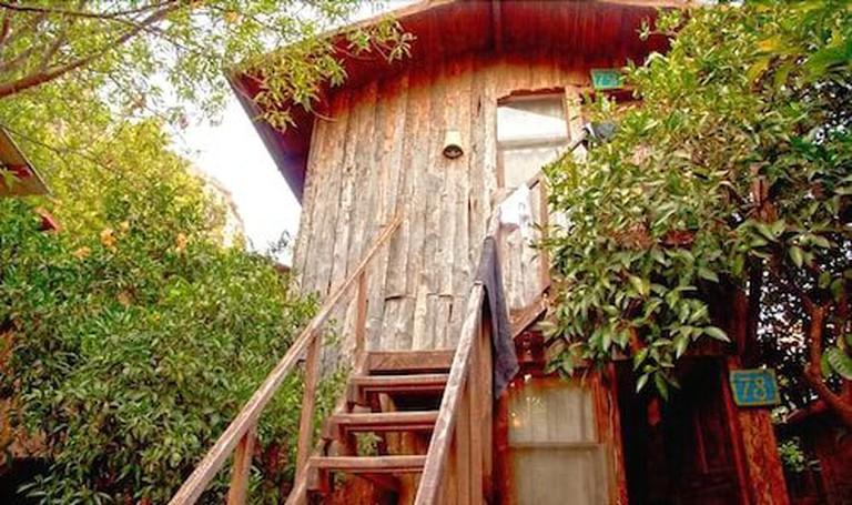 daf24080_y Bayram's Tree Houses