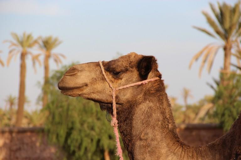 Marrakech is a tourist haven