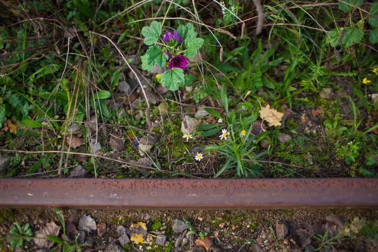 Flowers along the railroad tracks