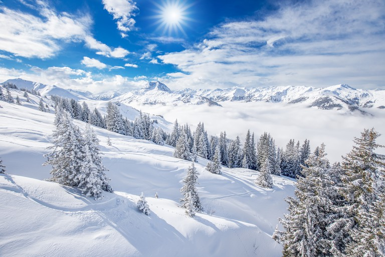 Trees covered by fresh snow in Alps. Stunning winter landscape