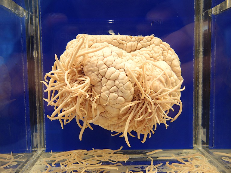 Display at Meguro Parasitological Museum