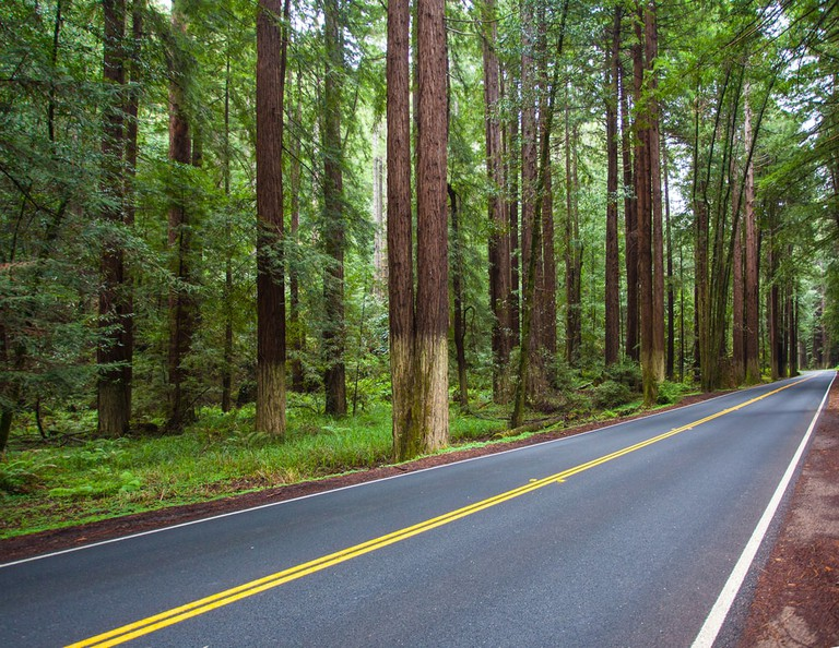 Redwood Tree lined highway in Mendocino County