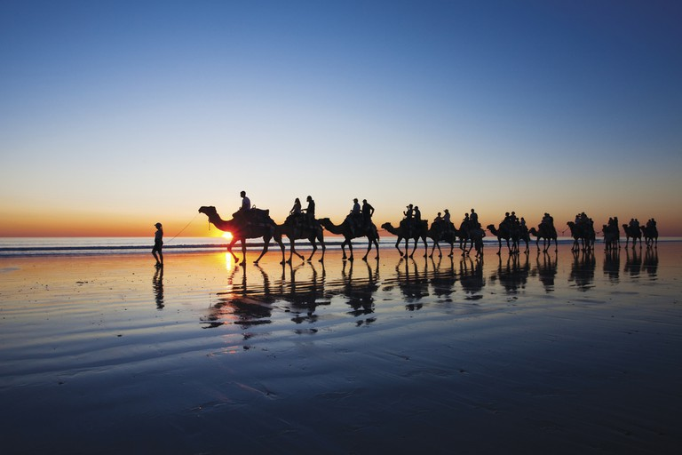 Camels walking on Cable Beach, Broome, Western Australia