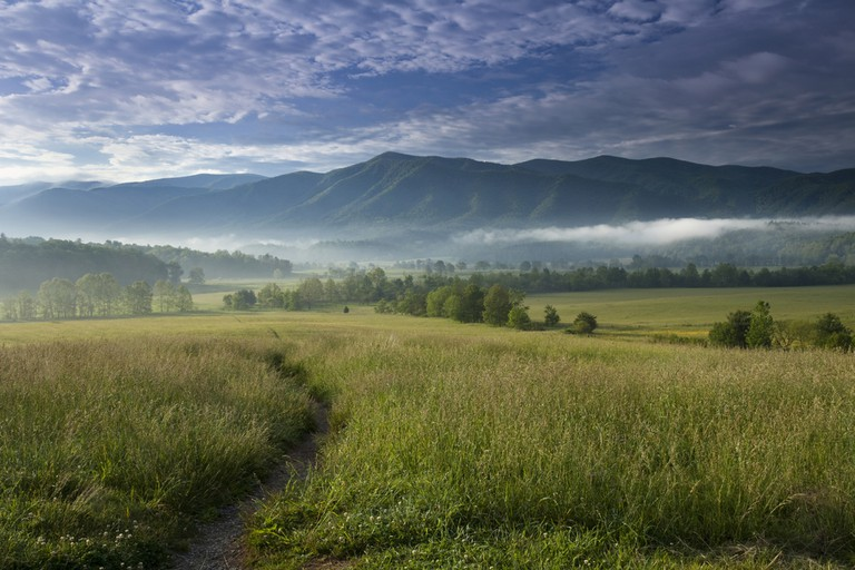 Looking out in Cades Cove in the Great Smoky Mountain National park. The trees lining Hyatt Lane are seen off in the distance.