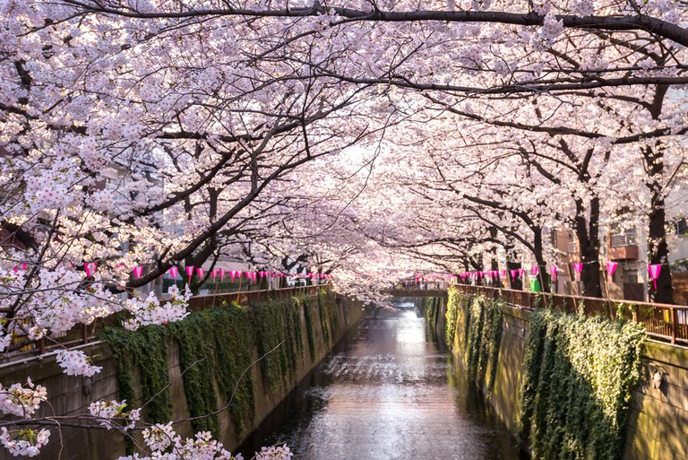 Cherry blossom lined Meguro Canal in Tokyo, Japan. ©Twenty two hours