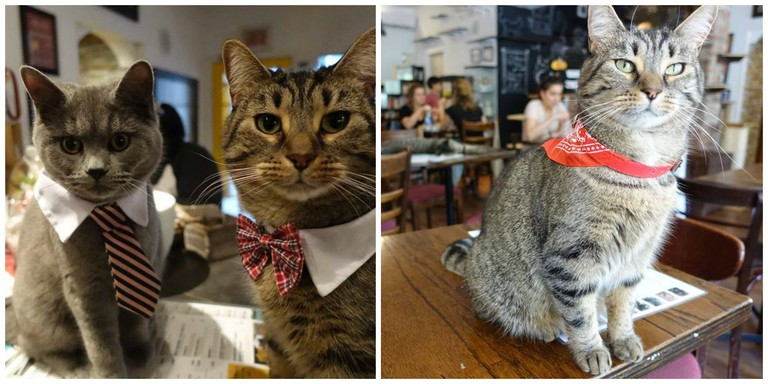 Cats on tables | Courtesy Café Chat