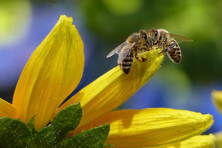 The Garden of Bees