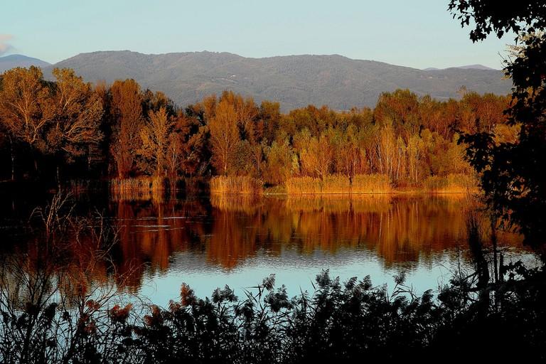 Tiber Lake Trees
