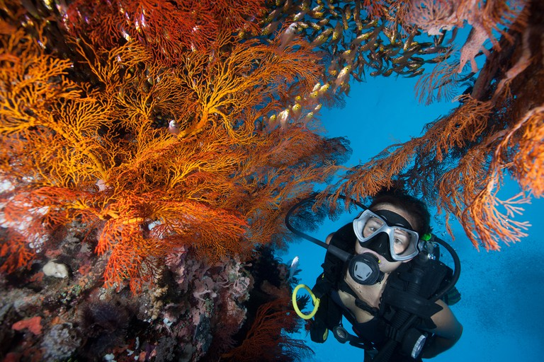 Scuba diving at the colourful coral reef
