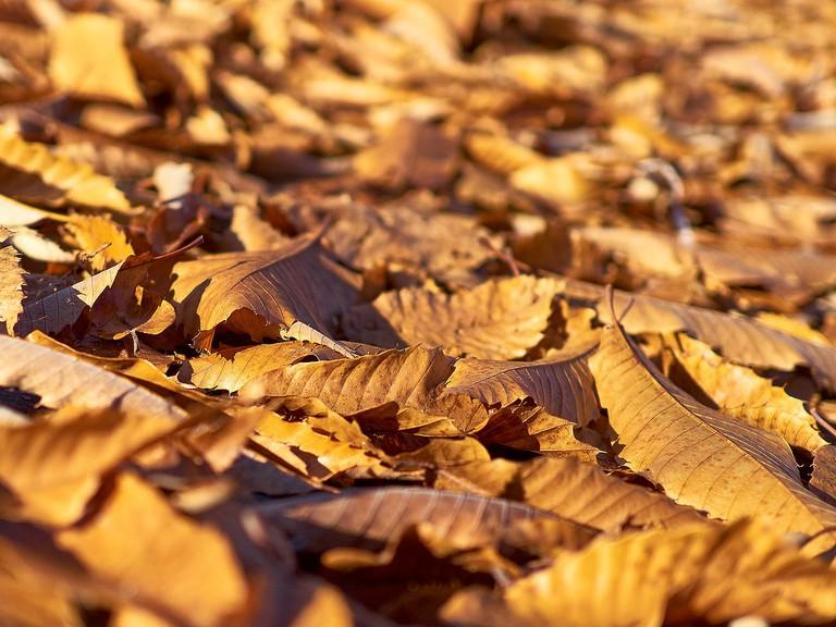 Autumn Leaves | © Torsten Scholz/Flickr