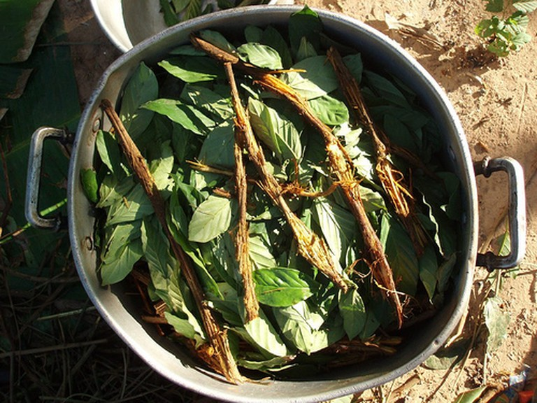 Ayahuasca Ingredients © Awkipuma/WikiCommons