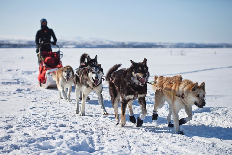 Dog Sledding © Skeeze/Pixabay