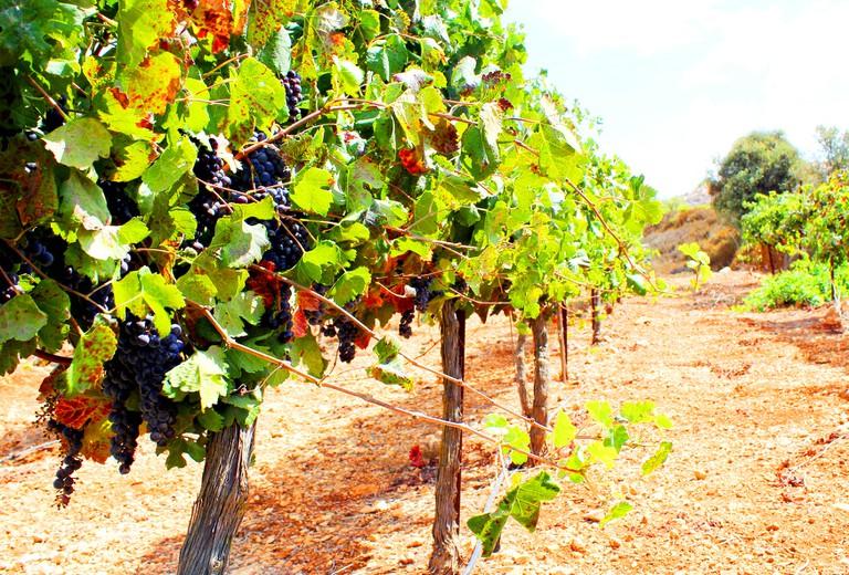 EtZion Winery © Yair Aronshtam