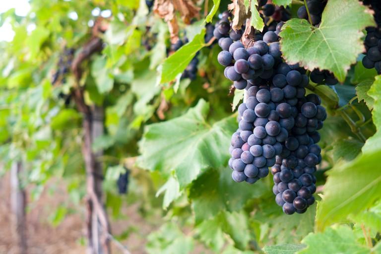 Around the Vineyard | © Phil Roeder/Flickr