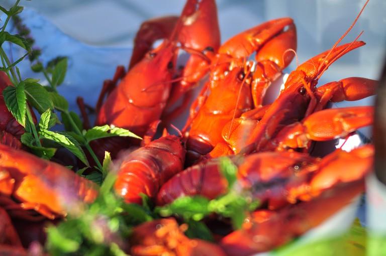 Crayfish © Zdenko Zivkovic/Flickr