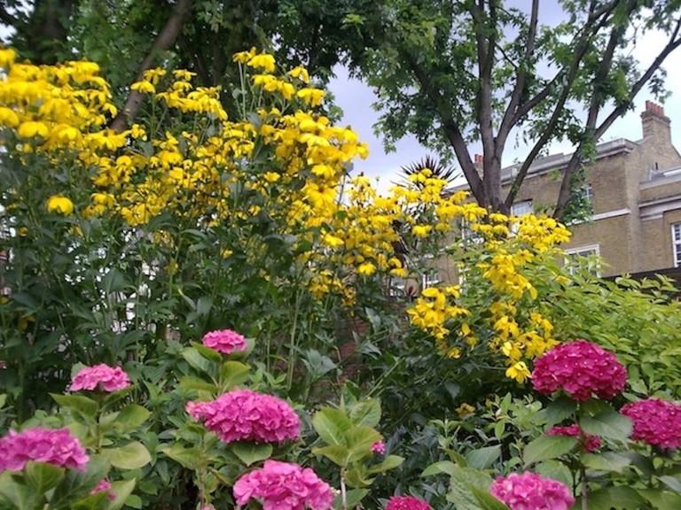 Flowers In Bernie Spain Gardens