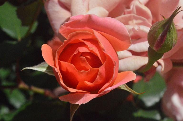 flickr.com - Botanic Gardens