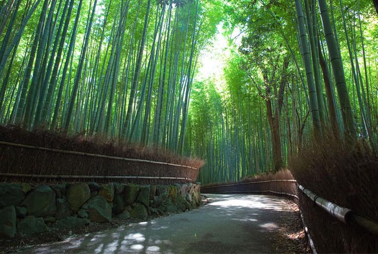 Sagano Bamboo forest, Arashiyama, Kyoto | © Casey Yee, Flickr