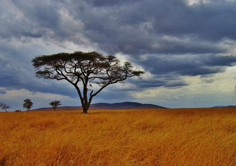 A Tanzanian plain | © Mariamichelle/Pixabay
