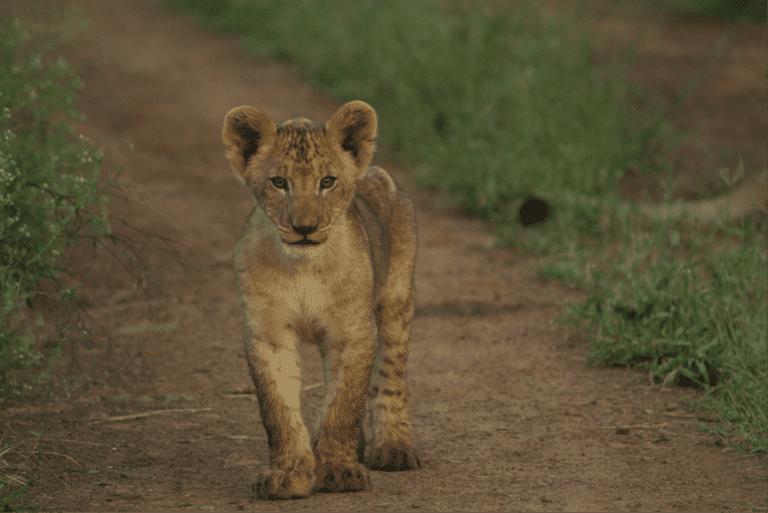 Reason to visit: lion, rhino and elephant safaris