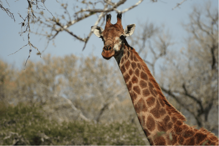Reason to visit: feeling as you are the only one in the reserve and, of course, seeing giraffe on foot