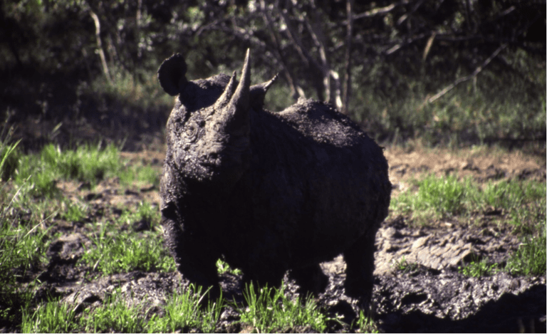 Reason to visit: spectacular birdlife and the rare rhinos