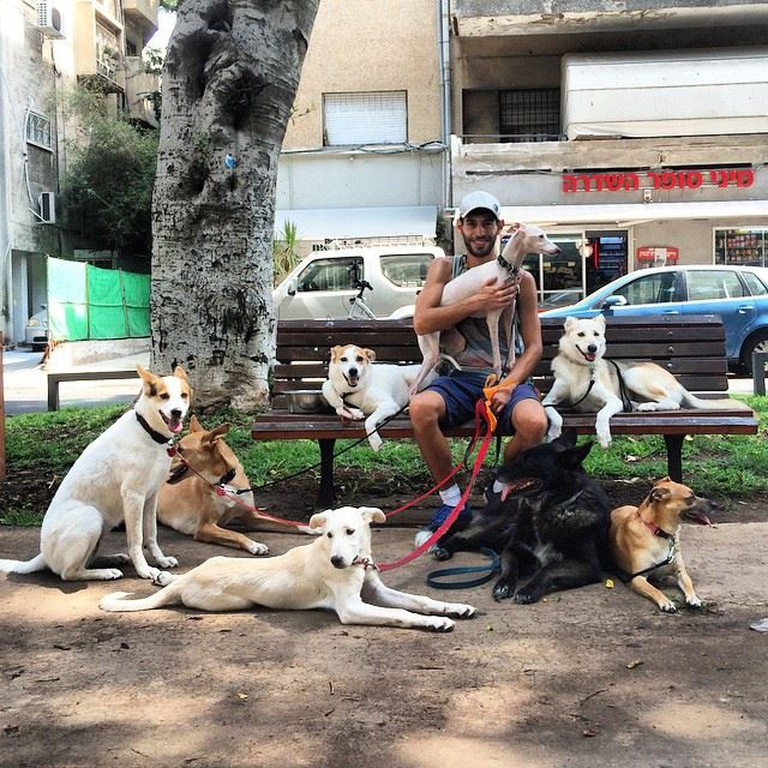 Dog Walker Noam Lenga © Nisan Almog/Instagram