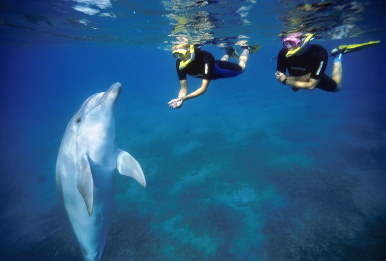 Swimming with Dolphins | © Israel_photo_gallery/Flickr