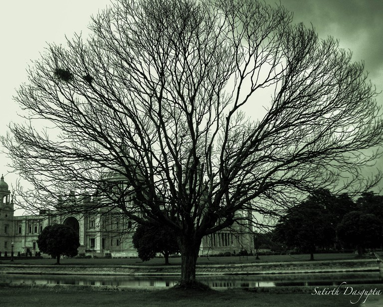 Victoria Memorial and the tree| © Sutirth Dasgupta