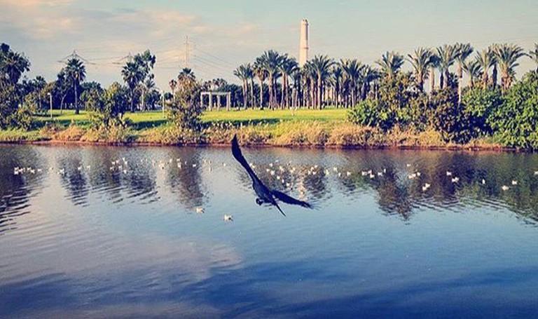 Park HaYarkon © Gila Rabinowitz/Instagram