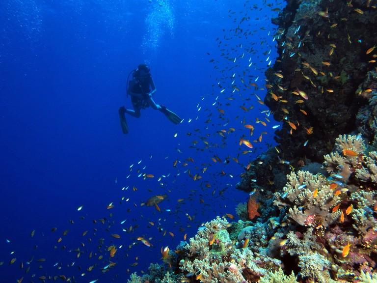 Scuba Diving in the Red Sea Reef | © Derek Keats/Flickr