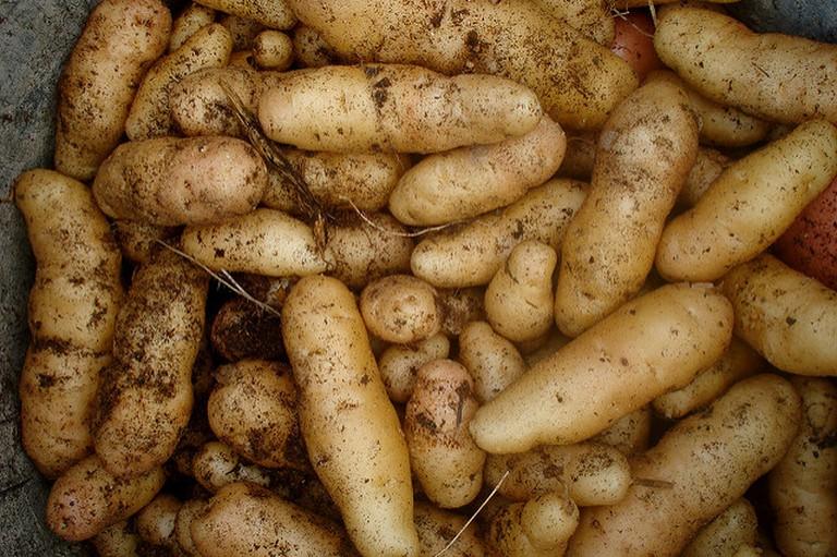 A potato harvest | © Christian Guthier / Flickr