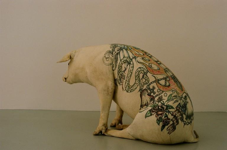 A tattooed pig of Delvoye's 'art farm' project | © Ergonomik/Flickr