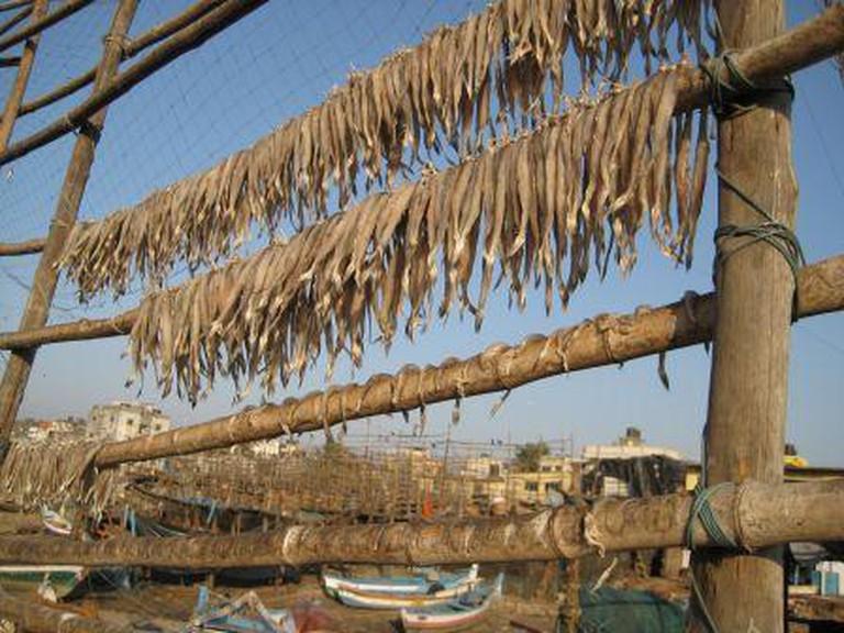 Drying Fish (Bombil) | © Madhav Pal