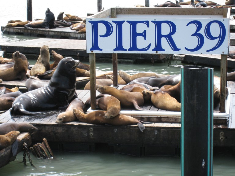 Pier 39 Sea Lions © Jeff Kramer/Flickr