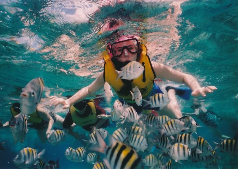 Underwater Experience   © skeeze/Pixabay