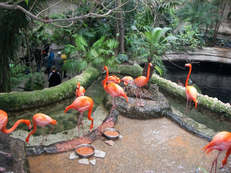 Flamingos at the Dallas Aquarium | © M. Watson