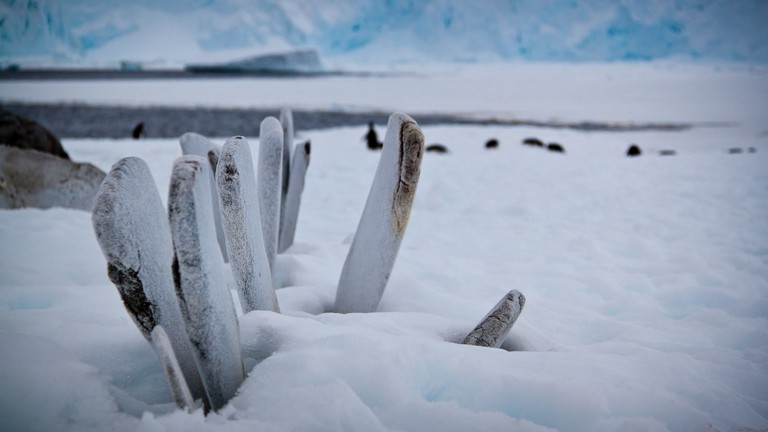 Whale Bones in Antartica