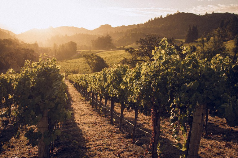 The Hess Vineyards in Napa Valley