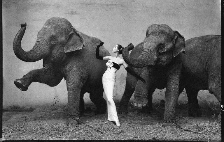 Dovima with elephants, evening dress by Dior, Cirque d'Hiver, August 1955 ©Richard Avedon