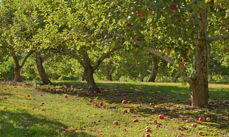 autumn orchard| © liz west/flickr