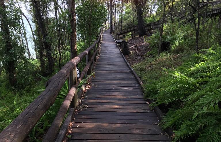 Noosa National Park Boardwalk / ©Sally James