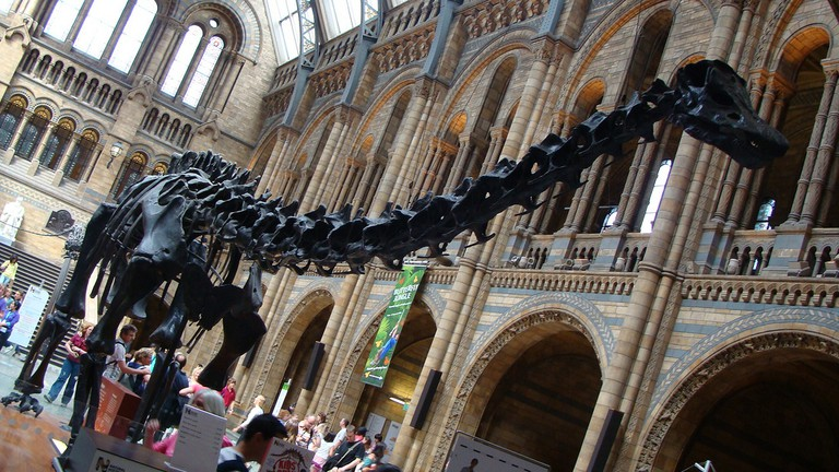 Diplodocus in the Great Hall of the Natural History Museum, London