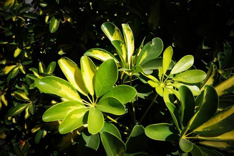 El Salvador Plants | © gerson_rodriguez/Pixabay