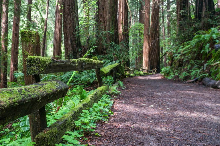 Muir Woods © Jumilla/Flickr