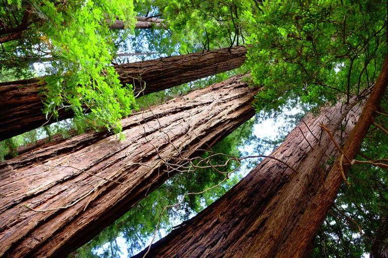 Muir Woods © Nick Harris/Flickr
