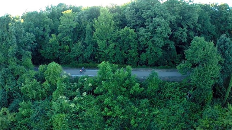 The Tanglefoot Trail