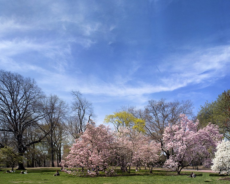 central_park_spring_pano | © Dave Beckerman/Flickr